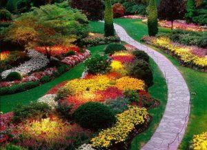 Como Plantar Las Mejores Plantas de Jardín Resistentes