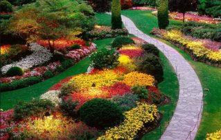 ¿Como Plantar Las Mejores Plantas de Jardín Resistentes?