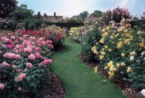 Consejos para Tener un Gran  Jardín de Rosas Acordes
