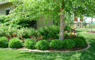 5 Factores a Tener en Cuenta al Momento de Elegir Árboles Para Jardines Pequeños