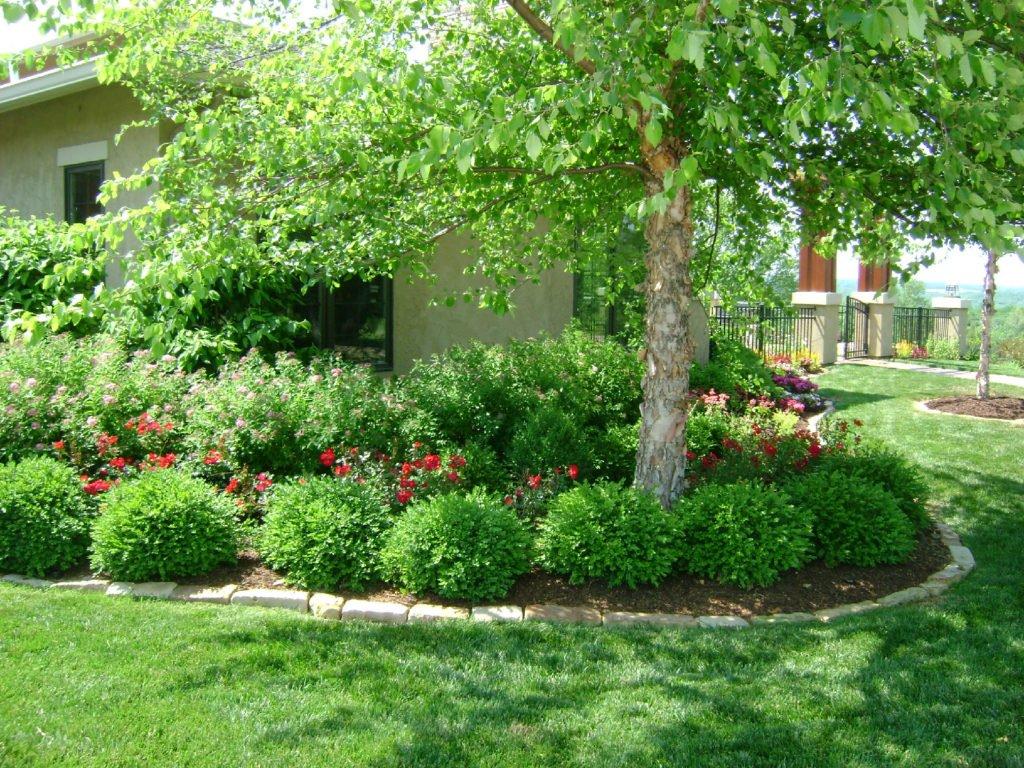 5 factores a tener en cuenta para elegir rboles para - Arboles para jardines pequenos ...