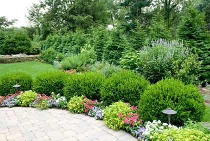 5 factores a tener en cuenta para elegir rboles para for Arboles ornamentales de jardin de hoja perenne