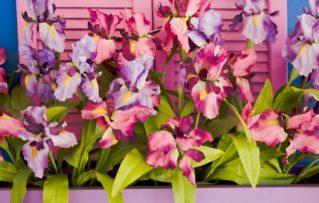 5 Excelentes Plantas con Flores para Colocar en su Jardín