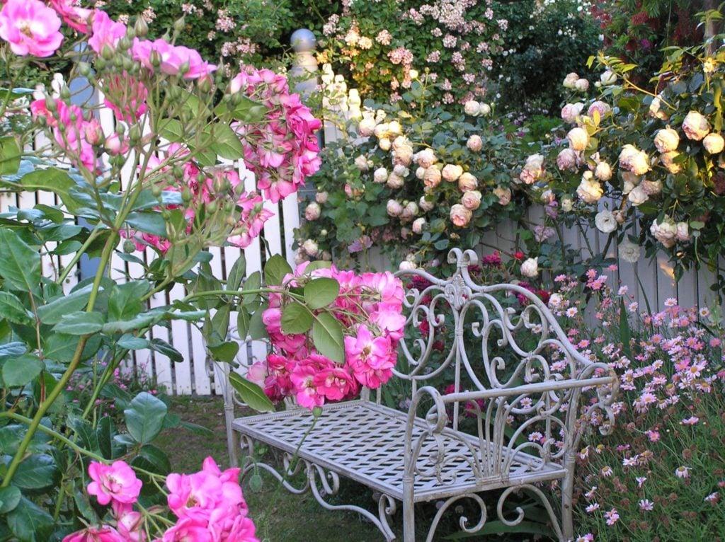 Plantas Bonitas Para Jardin Gallery Of Amazing Fabulous Compra - Flores-bonitas-para-jardin
