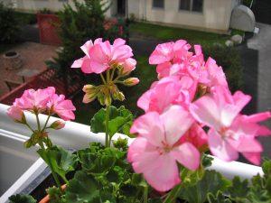 Excelentes Plantas con Flores para Colocar en su Jardín