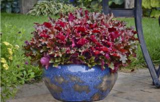 7 Mejores Plantas en Macetas de Jardinería para Adornar tu Porche