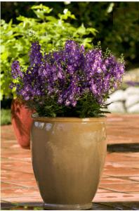 cuales son mejores Plantas en macetas de jardinería