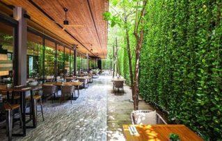 5 Impresionantes Plantas Enredaderas y Trepadoras para el Decorar el Hogar