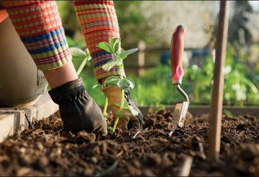 Ventajas del Abono Ecológico para Jardines Casero